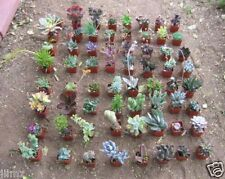 JIIMZ 9 DIFFERENT SUCCULENT COLLECTION 9 SPRING SPECIMENS no two alike