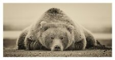 Deep Sleep by PHBurchett Bear Print 38x20
