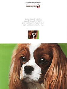 American Greetings Pet Partners Dog Greeting Card With Envelope