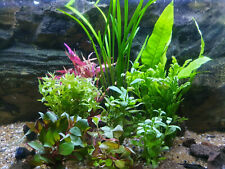 Aquarium Pflanzen Set 60L(7 Bunde)