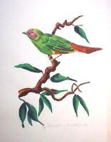 "C.E.Dammann, Hamburg (XX.) monogrammiert, tolles Aquarell: ""Papagei - Amandine"""