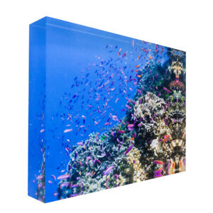 Fish on tropical coral Great Barrier Reef Acrylic Block Photo Print 0983