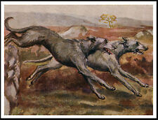 Scottish Deerhound Dogs Hunting Lovely Image Dog Art Print Poster