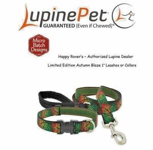 "Lupine Lifetime Limited Edition Dog Leash or Collar- 1""- LIMITED - AUTUMN BLAZE"