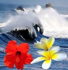 MYSTIC BAY ~ Fragrance OIL 1/2 oz bottle ~ A magical oceanic fragrance