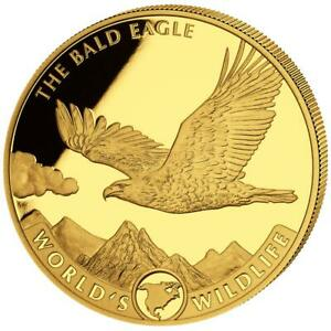 Kongo 500 Francs 2021 - World's Wildlife (3.) - Weißkopfseeadler - 5 Oz Gold PP