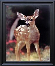 Whitetail Mule Deer Fawn Wild Animal Bathroom Wall Decor Black Framed Picture