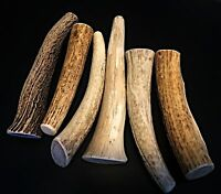1 Medium Elk Whole Antler Dog Chew..Free Shipping...100% Natural And Healthy