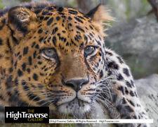 Jaguar Portrait Up Close Feline Big Cat-Color Fine Art Photo-8x10-COA-SIGNED