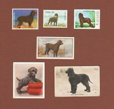 Irish Water Spaniel dog postage stamps and cards, set of 6