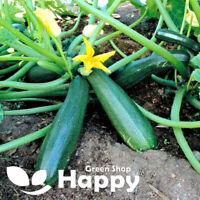 COURGETTE - Astra Polka - 40 seeds - Zucchini - Cucurbita pepo - vegetable seeds