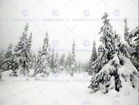 PHOTO LANDSCAPE WINTER SCENE SNOW TREES FROZEN FOREST POSTER PRINT BMP10710