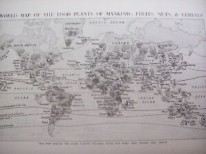 Map of World Food Fruits Nuts & Cereals 1920's 1 Page Encyclopedia to Frame?