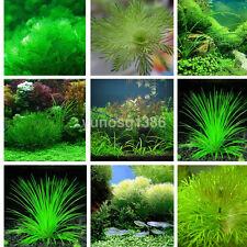 1000x Aquarium Grass Mixed Seeds Water Aquatic Home Fish Tank Plant Decor New US