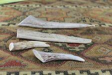 Axis Deer Antler Knife Handle Crafts Pen Antler Tines Dog Chews Sheds Horns