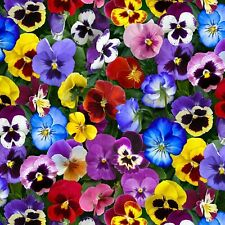 Fabric Flowers Pansies Rainbow Real Like Full on Cotton by ELIZABETH 1/4 yard
