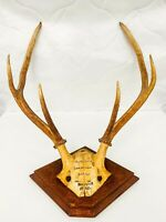 1903 Antique Real Horns Antlers Red Deer Taxidermy Wall Plaque Hungary Hunting