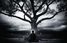 Stampa incorniciata-Buddista Zen Master seduto sotto un albero (PICTURE BUDDHA arte)