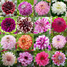 100PCS Mixed Dahlia Flower Seeds Flower Plant Perennial Bonsai for Home Garden