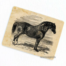 Horse #1 Deco Magnet, Decorative Gift Fridge Refrigerator Animal Illustration
