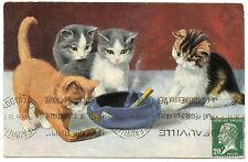 Chats. Cats. Katze