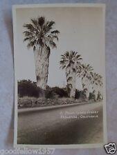 RPPC CALIFORNIA REDLANDS, A PALM LINED STREET ~ CA! CALIF REAL PHOTO POSTCARD PC
