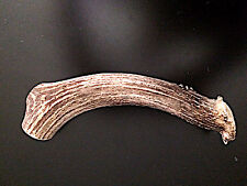 Extra Large whole deer antler dog chew/ toy! Awesome Price!!