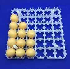 ✔ ✔ ✔ 4 pcs 36/144 egg Tray 28 * 28 * 2,8 cm incubation and transportation✔ ✔ ✔