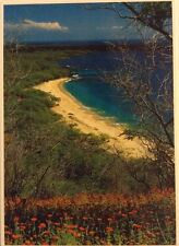 Maui's Making Beach White Sand Pristine Waters Postcard Impact Photography