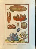 1751 DIDEROT Antique Folio Hand Colored Engraving Coral Sealife #74