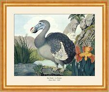 Der Dodo Kapuzentragender Nachtvogel flugunfähig ausgestorben Zötl A3 21