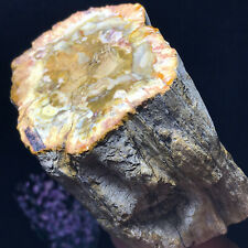 Top Natural Petrified Wood Fossil Crystal Polished Slice Madagascar 592g A11851