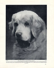 CLUMBER SPANIEL SANDRINGHAM SPARK THE KINGS DOG ORIGINAL 1934 PRINT PAGE