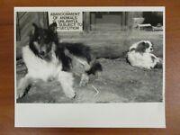Vintage Glossy Press Photo Natick MA The Dogs of Natick Community Farm 3/90