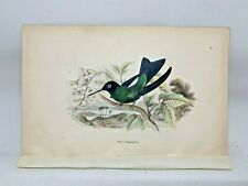DELUXE ED Hand-colored Plates 1840 Jardine History Hummingbirds #16 Wagler's