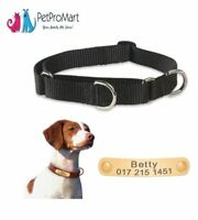 Lupine Basics Dog Collars | Personalized Dog Collar | Custom Engraved Rivet Tag