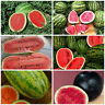 Angebot 6 Sorten Wassermelonen Samen fruchtig süß Wassermelonensamen