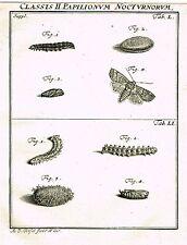 """Rosel's """"Insecten"""" - Copper Engraving - """"PAPILIONUM NOCTURNORUM - L"""" - 1740"""