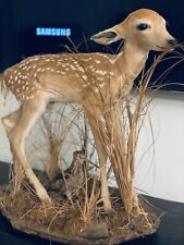 Beautiful Deer Fawn Taxidermy Mount