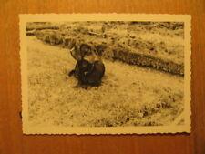 Altes Foto Dackel Hund Dachshund