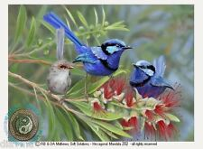 © ART - Australian Splendid Blue Fairy Wren Bird Original nature print by Di