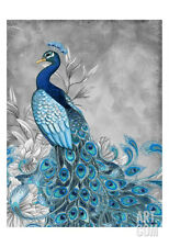 Peacock Beauty 1 Art Poster Print by Nicole Tamarin, 13x19