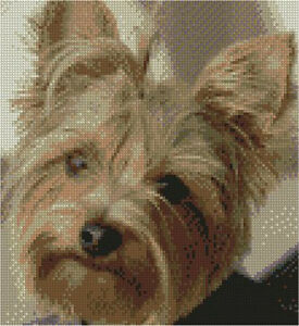 """Yorkshire Terrier Complete Counted Cross Stitch Kit 8.75"""" x 8"""""""