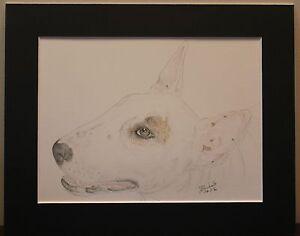 English Bull Terrier. Original Drawing or Print