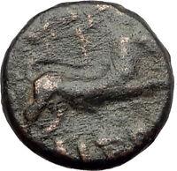 AMPHIPOLIS in MACEDONIA 1stCenBC RARE R1 Ancient Greek Coin ARTEMIS BULL i62378