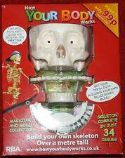 How Your Body Works Magazine Issue 1 Build Your Own Skeleton Skull and Teeth