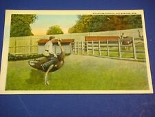 Riding Ostrich Hot Springs Arkansas Vintage Colorful Postcard PC6