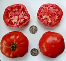 Dinner Plate - Organic Heirloom Tomato Seeds - Huge Beefsteak - 40 Seeds