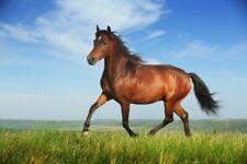 running horse  wall affiche poster