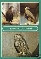 AK, Cottbus, Tierpark Cottbus, drei Abb., Version 1, 1986